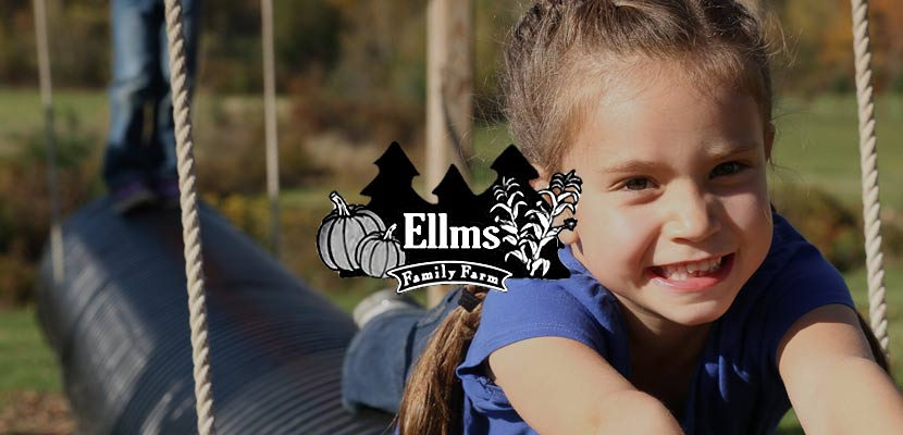 Ellms Family Farm Related Website Design and Development