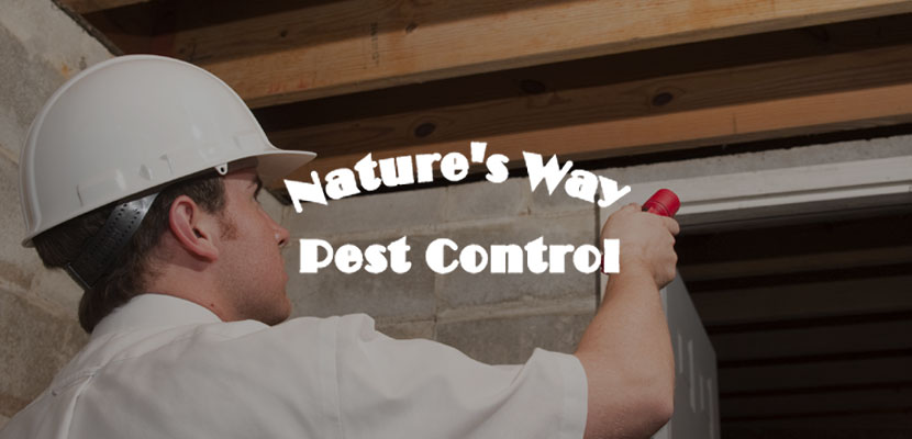 Nature's Way Pest Control Related Website Design and Development