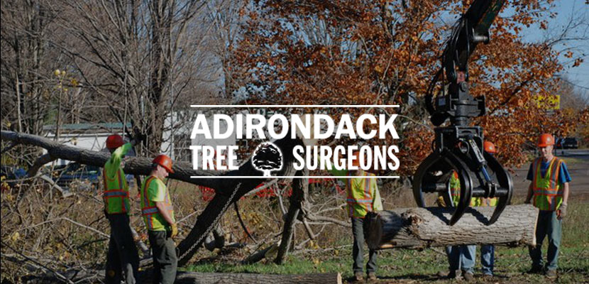 Adirondack Tree Surgeons